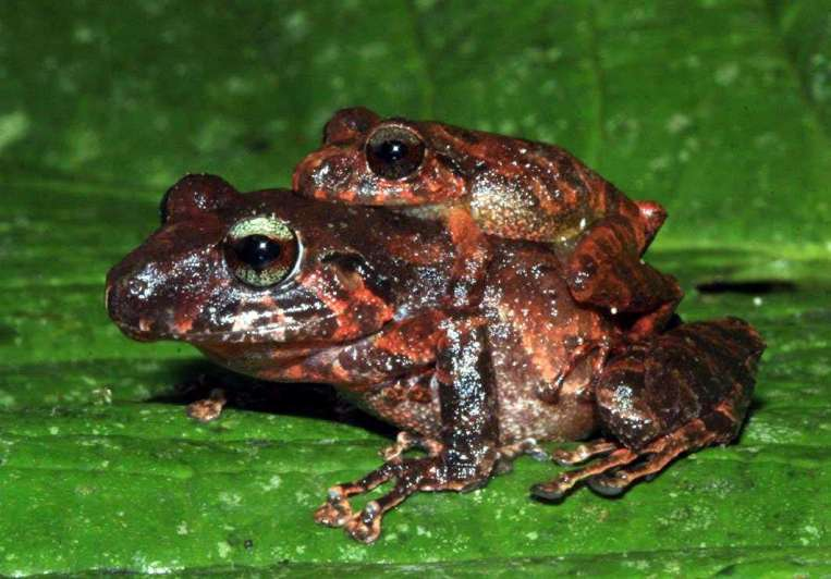 Colombia: nuevas especies de flora y fauna
