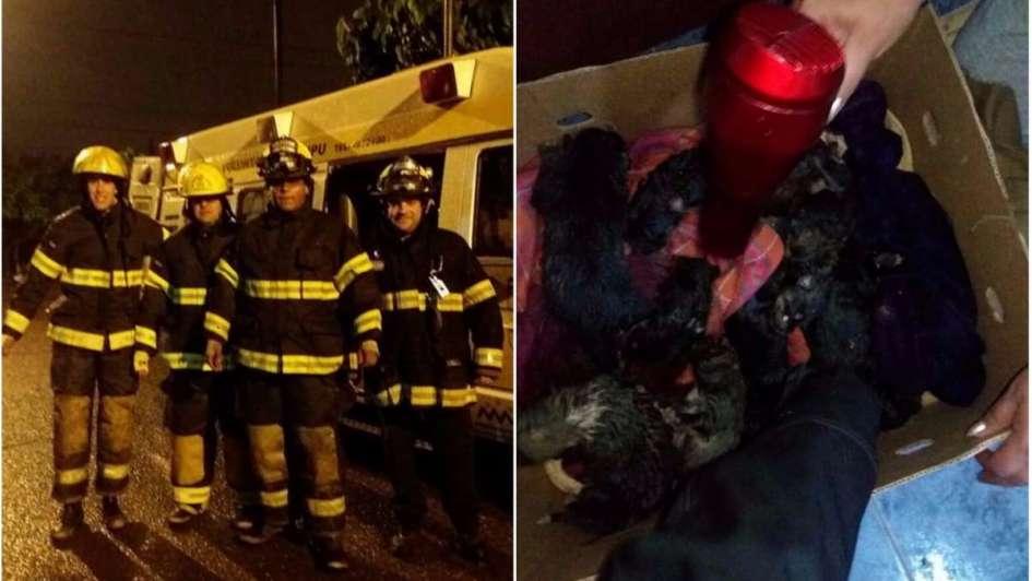 Bomberos héroes: salvaron a una perra y a sus cachorros de morir ahogados por las lluvias