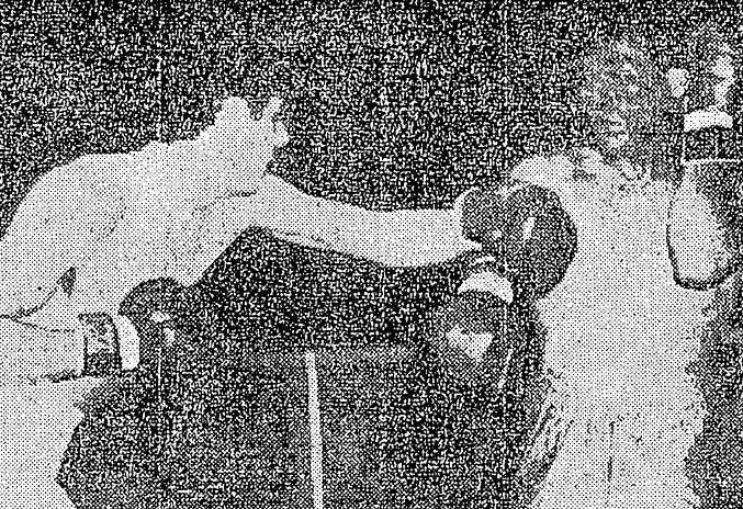 Un 13 de octubre de 1967: Carlos Aro ganó por puntos
