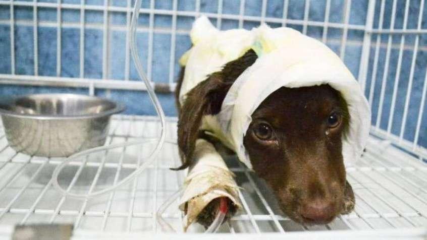 El peluquero que despellejó a un perro irá a juicio