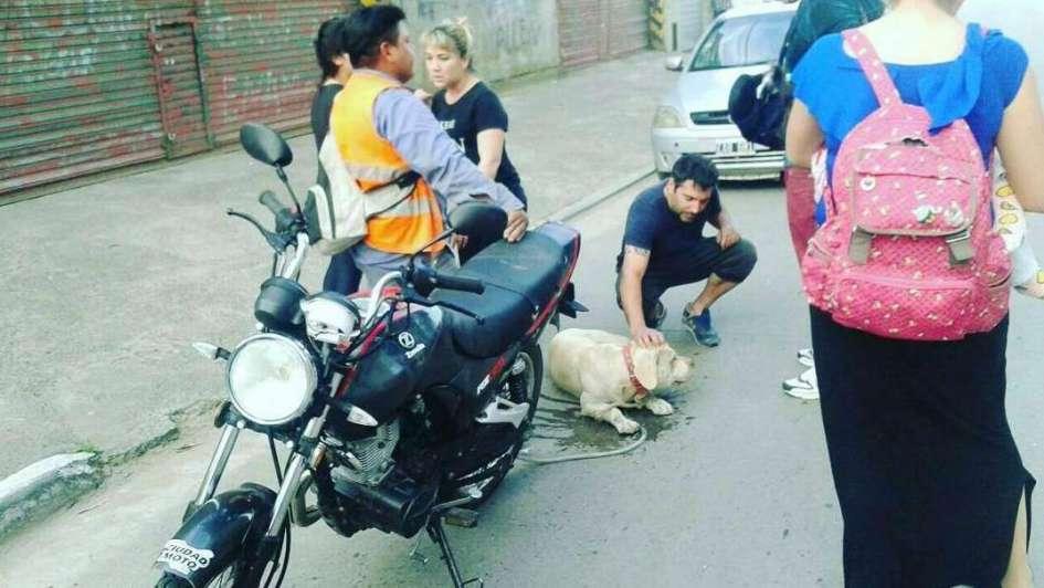 Arrancó la moto con su perro amarrado a ella
