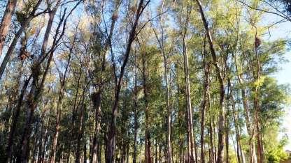 """""""No hay máquinas que purifiquen el aire de la forma que lo hacen los árboles"""", advierten."""