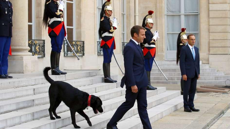 Perro de Macron se orina en plena reunión de ministros