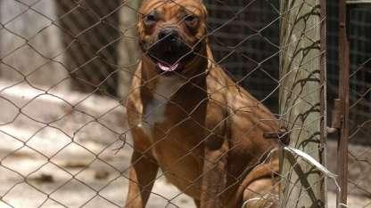 Los perros peligrosos deben circular con bozal y correa.