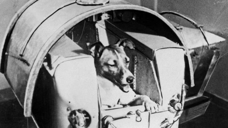 Hace 60 años Laika viajó al espacio pero jamás regresó