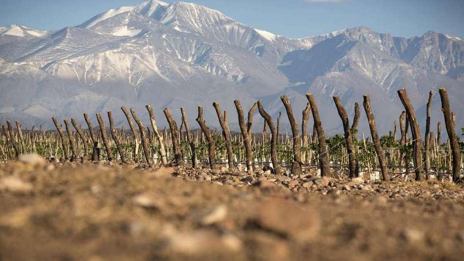 Microondas hogareños mejoran la producción vitivinícola