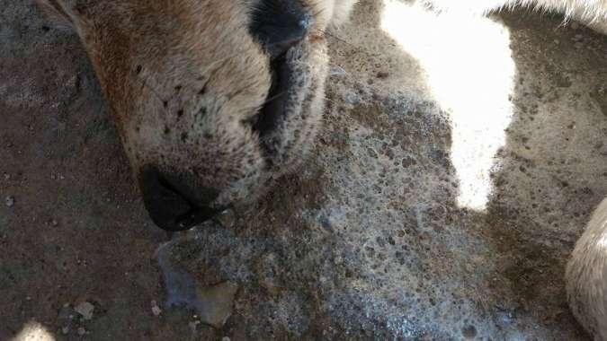 La matanza de decenas de perros conmueve a Tunuyán