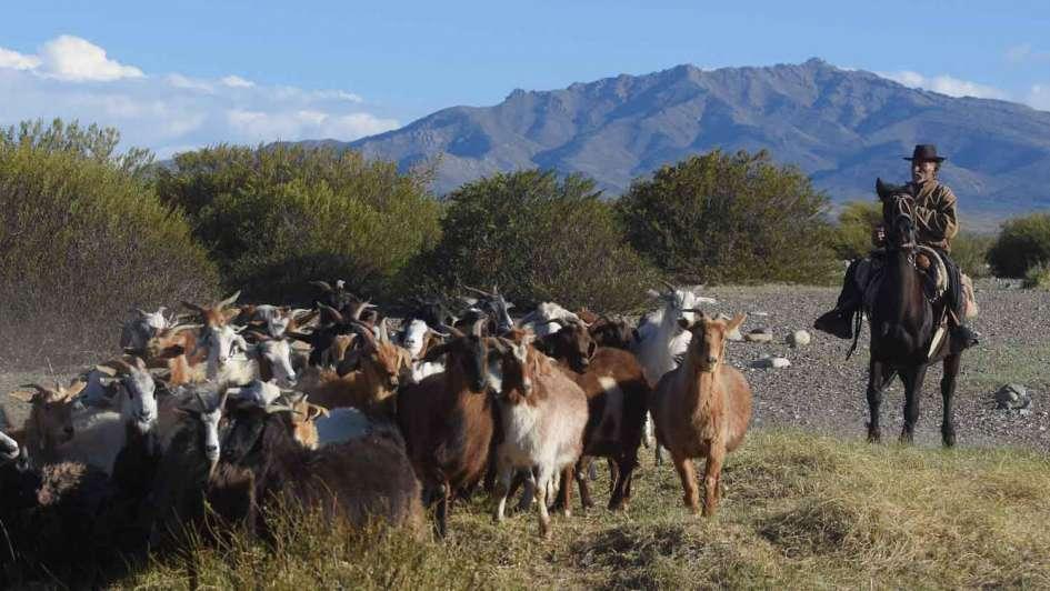 Mapuches de Mendoza: quiénes son, cómo viven y cuáles son sus reclamos