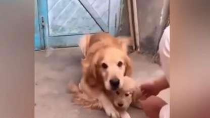 El tierno gesto protector de un perro con su cachorro