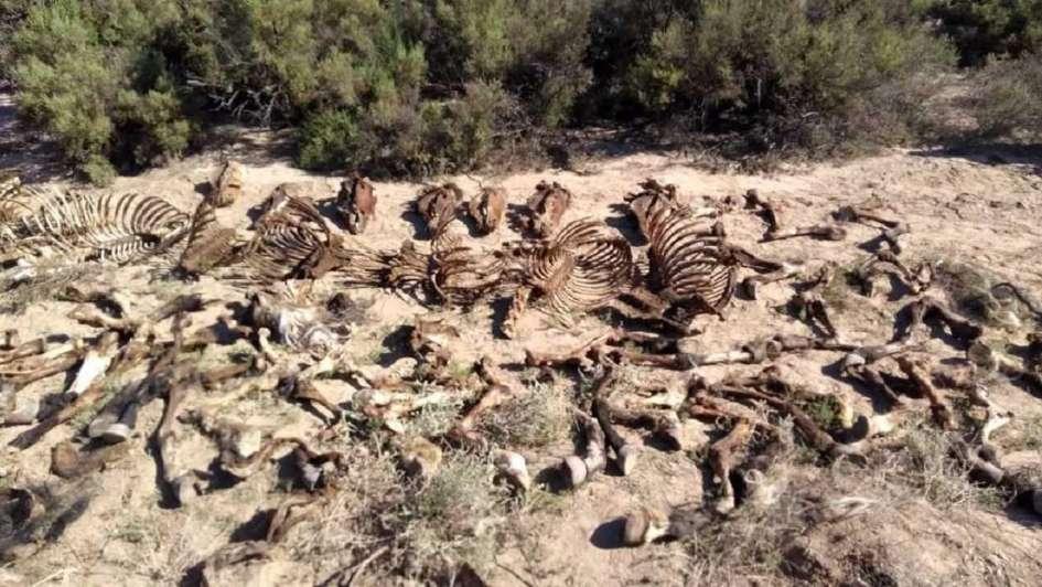 Hallaron un matadero clandestino de caballos en Las Heras