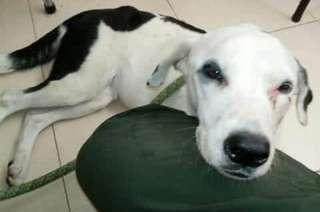 La perrita murió de la tristeza luego de esperar por un mes a sus dueños
