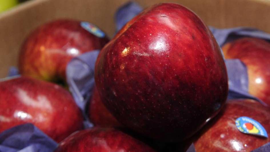 Fruticultura: sólo quedan 100 productores de pera y manzana en la provincia