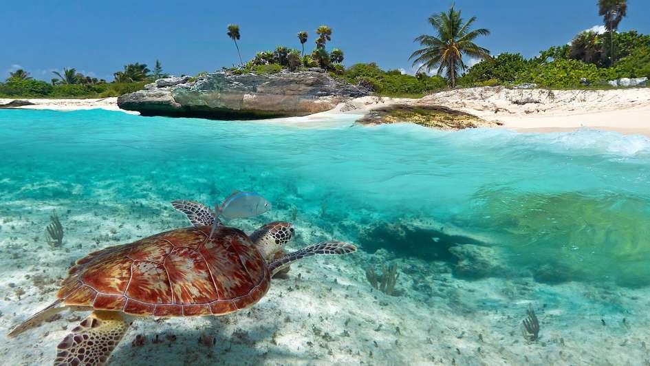 El Caribe y las playas que desvelan a los argentinos