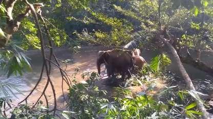 La manada hizo un particular gesto para agradecer el rescate del pequeño elefante.