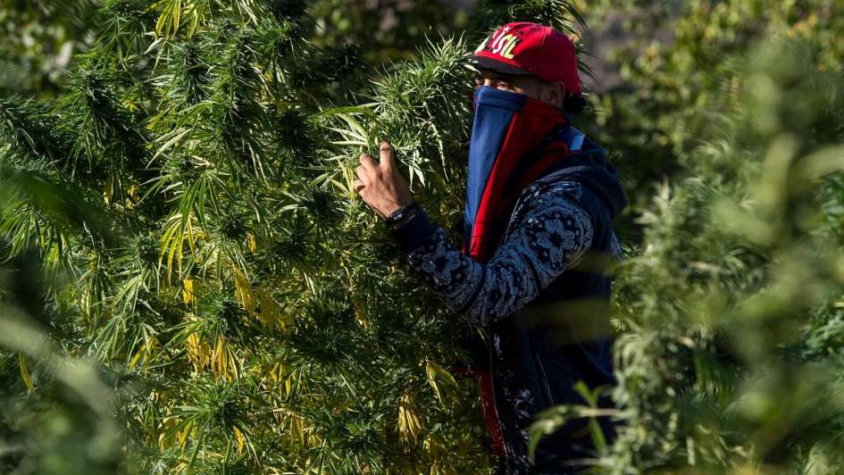 La ruta del cannabis atrae a miles de turistas a Marruecos