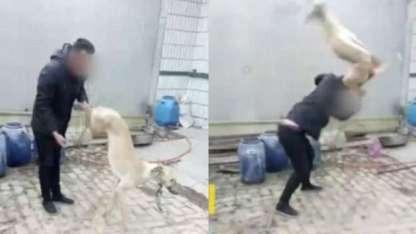 Un chino golpeó a su perro hasta matarlo