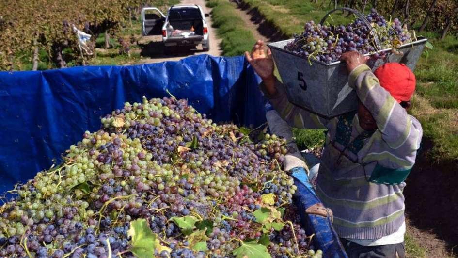 Dan precisiones sobre créditos del Nación para productores vitivinícolas