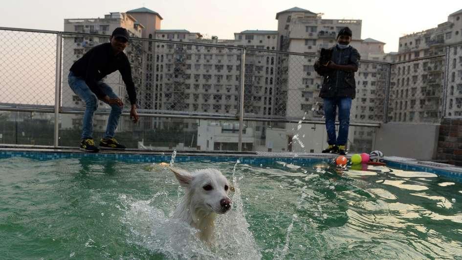 India: hotel de lujo para perros, con cafetería, piscina y masajes ayurvédicos