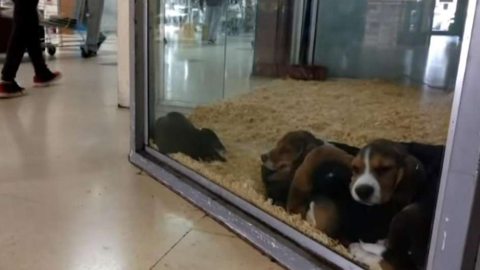 Guaymallén prohibió la exhibición de mascotas a la venta