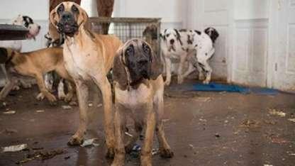 Los perros vivían entre sus excrementos y orina.