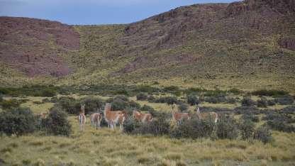 reserva de La Payunia