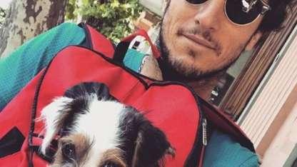 El chofer de Pampita habría atropellado al perro de Pico Mónaco