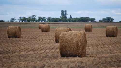 El heno de alfalfa se posiciona en el mercado mundial