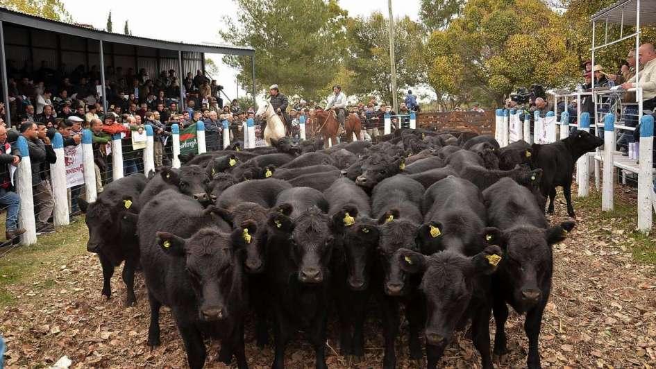 """Gabriela Guagliariello: """"La ganadería empieza a ser rentable"""