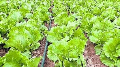 Por segundo año consecutivo aumentó el uso de fertilizantes.