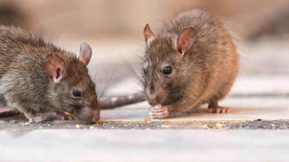Rosario: un niño de dos años murió al comer veneno para ratas
