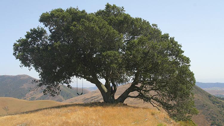 """Ecología: """"Árboles sin gran necesidad de agua"""""""