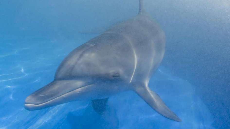 Un virus provoca la muerte de casi 200 delfines en Brasil