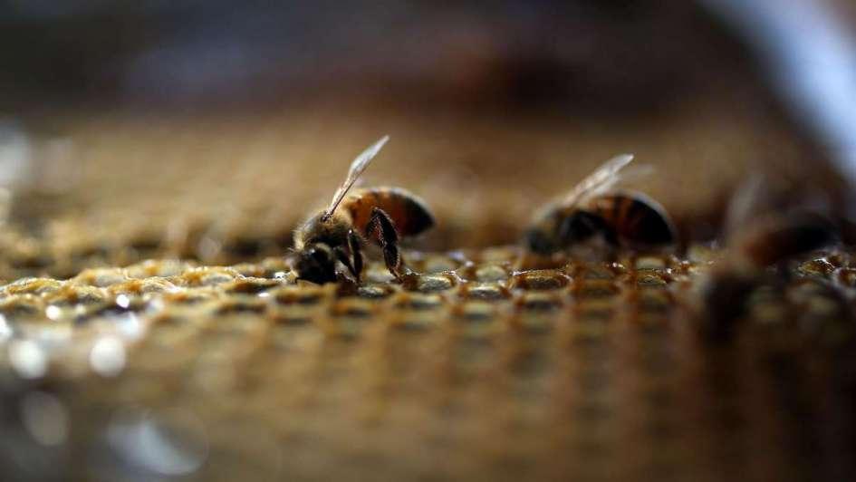El sector apícola exportó 85 millones de dólares en 2017