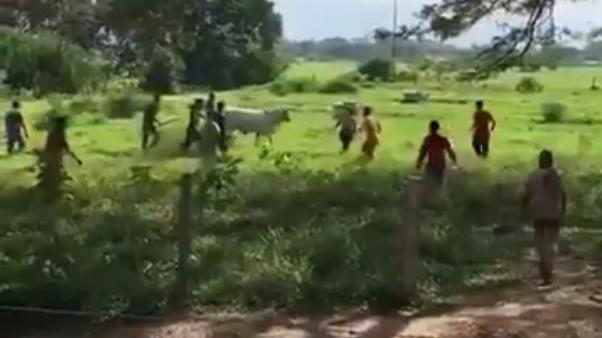 La desesperación hecha video: cazaron una vaca por el hambre en Venezuela
