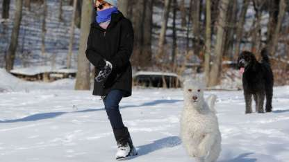 Adan y Eva de paseo junto a su dueña.