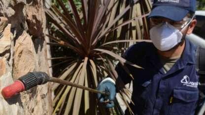 Además del control casero, recomiendan contratar empresas especializadas para eliminar plagas que haya en el hogar.