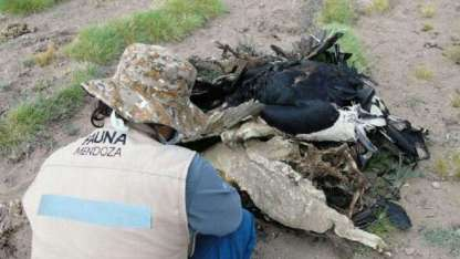 Los animales muertos fueron hallados todos amontonados en la zona de Los Molles.