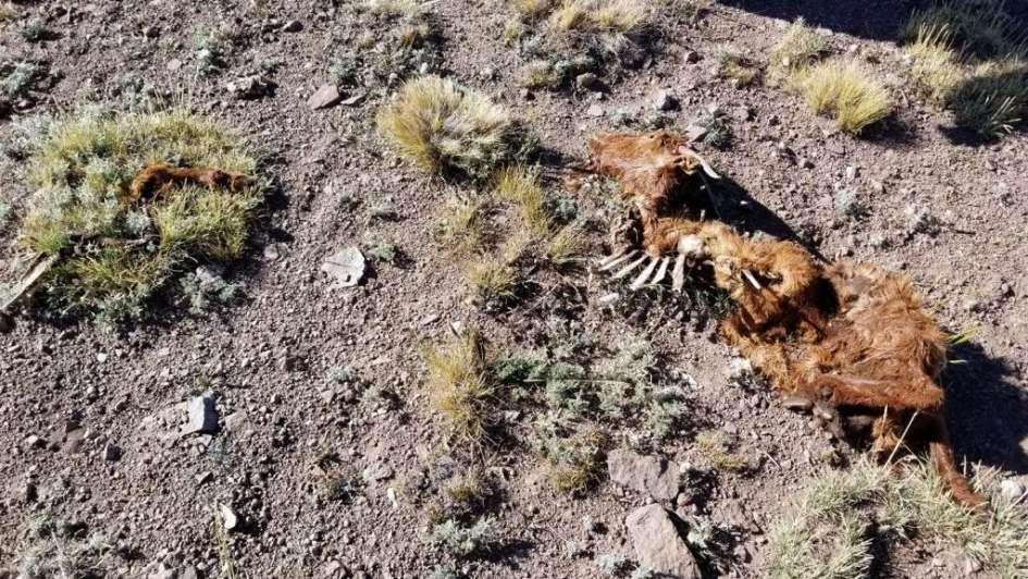 Son 5 las especies animales en peligro en la provincia
