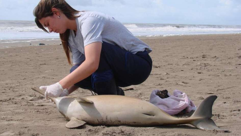 Encontraron 14 delfines muertos en la Costa Atlántica