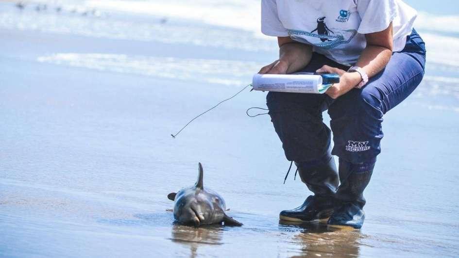 Aparecieron 14 delfines muertos en la Costa Atlántica — Dolor
