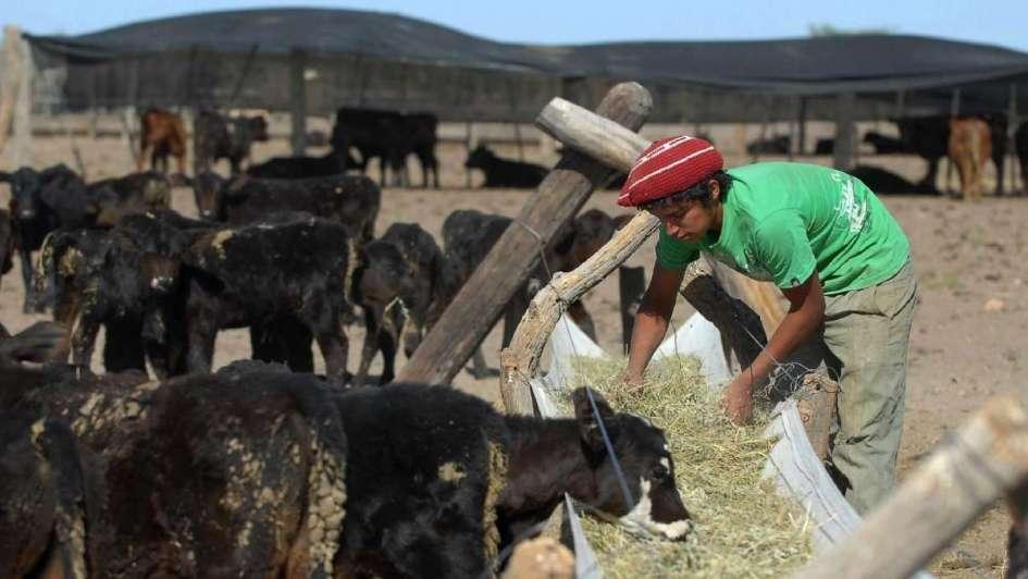 Pequeños productores ganaderos en serios problemas por la falta de pasturas
