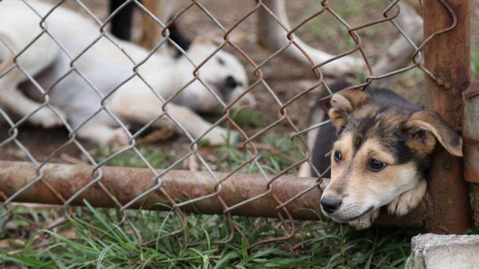 Resultado de imagen para multas maltrato animal argentina
