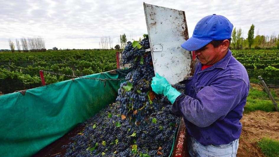 Vendimia 2018: comienza a moverse el mercado de uvas