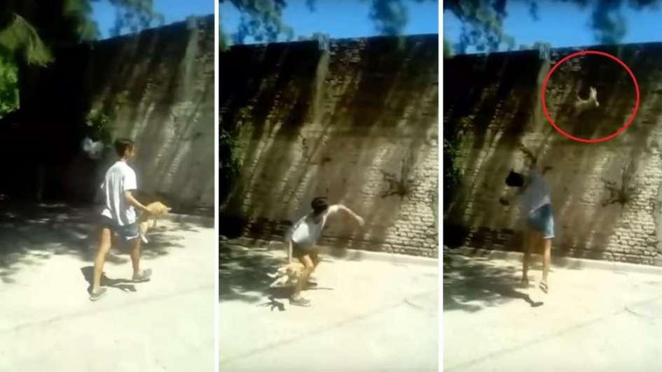 Indignación por el video de un joven que revolea a un gatito en San Juan