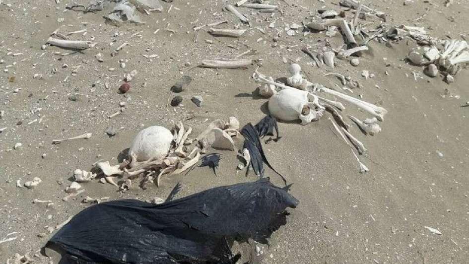 Fin del misterio: los esqueletos hallados en Chubut pertenecen a pueblos originarios