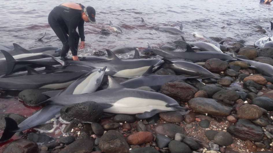 Murieron 21 delfines que se quedaron varados en una playa mexicana