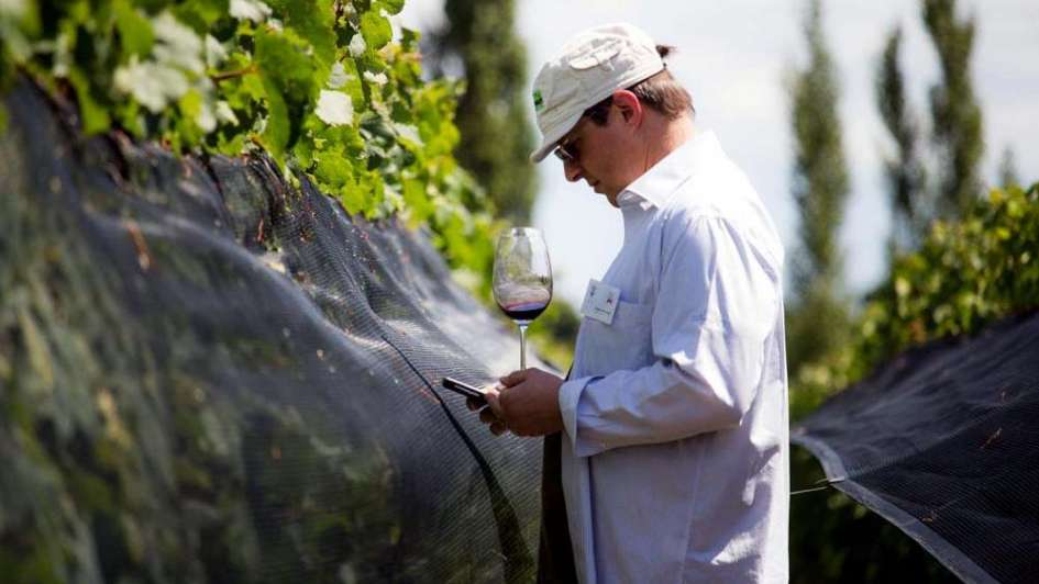 Master of wines cataron 400 vinos argentinos