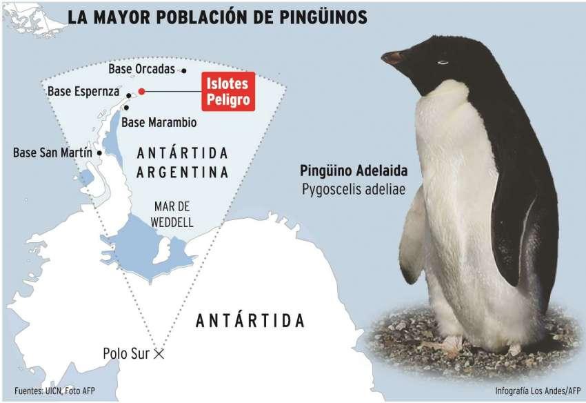 Los pingüinos adelaide