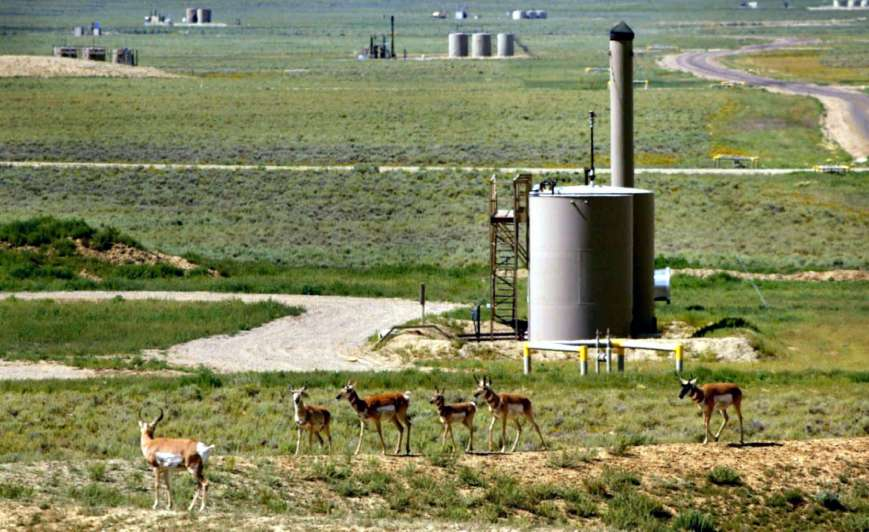 Ecología del movimiento: las barreras humanas que afectan la migración animal
