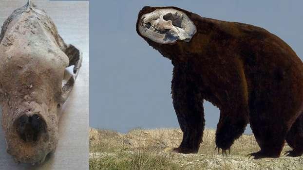 Hallaron restos de un oso gigante de fines del Pleistoceno